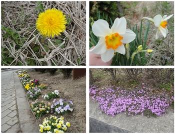 春いろいろ.jpg